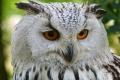 owl-agw2